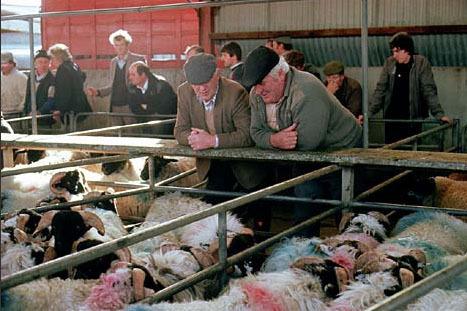 Irish farmers looking fresh to death