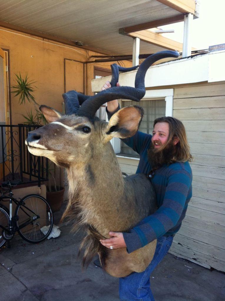 Taxidermied kudu on Craigslist