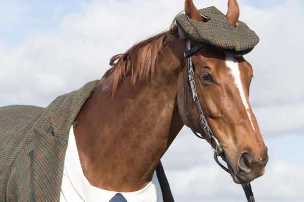 World's First Bespoke Harris Tweed Suit for a Horse