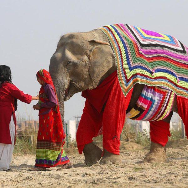Women Knit Custom Sweaters for Elephants